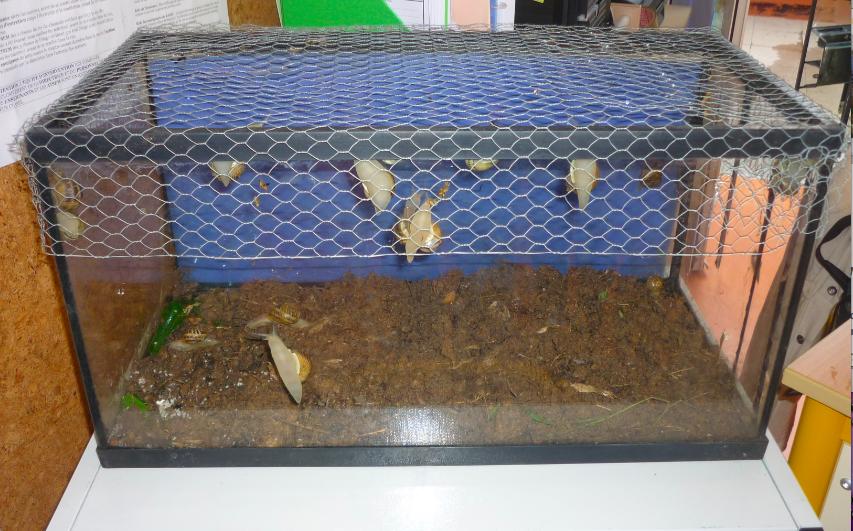Célèbre Un élevage d'escargots dans la classe | Les petits zèbres CF73